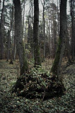 by ♡Gosia M more: http://xgosia-mx.tumblr.com   &   https://www.facebook.com/gosiamphoto  #forest #wood #gosiam #view #dark