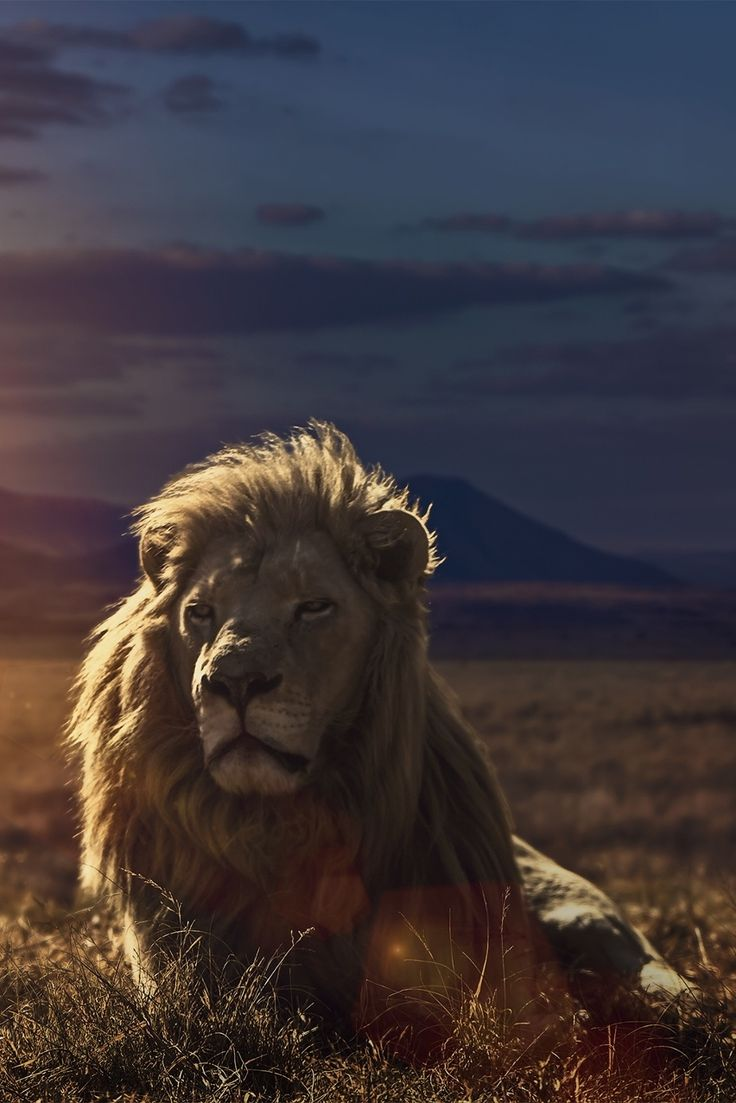 "wavemotions: ""The Golden King of the Savannah by Jackson Carvalho"""