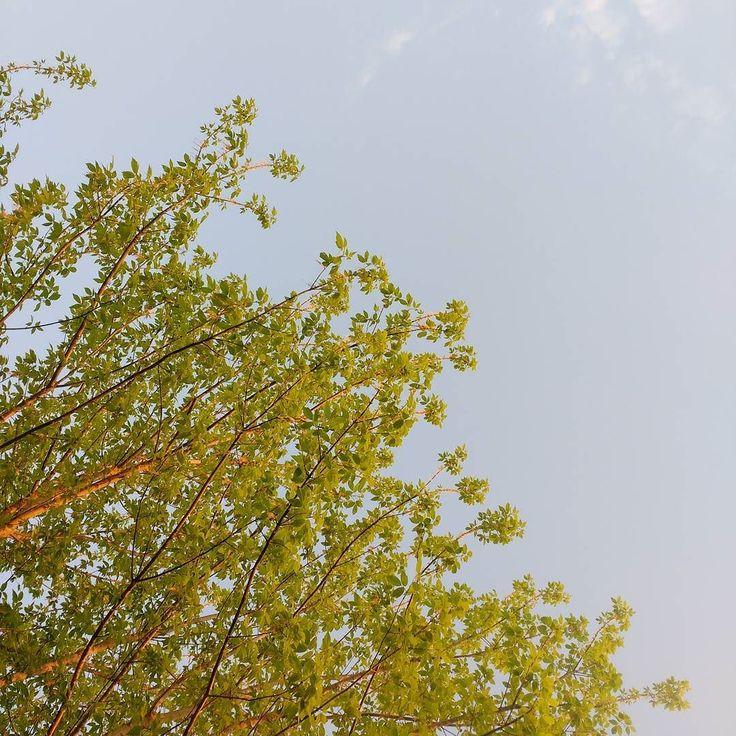 Abbasso i colori pastello.  #verde #sorridoconpoco