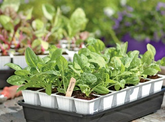 Deck Garden Ideas find this pin and more on patiodeckgardening ideas Answers To Frequently Asked Questions About Starting Seeds Indoors