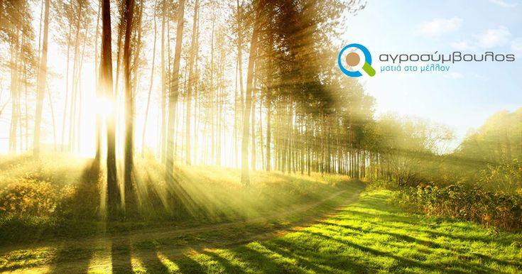 Δάσωση και δημιουργία δασικών εκτάσεων