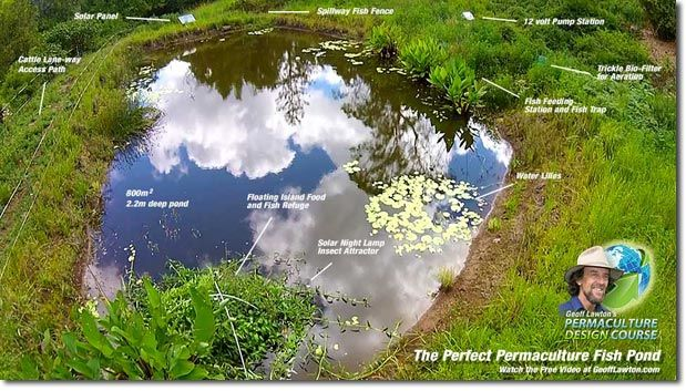 1580 best images about homesteading self sufficiency on for Garden pond management