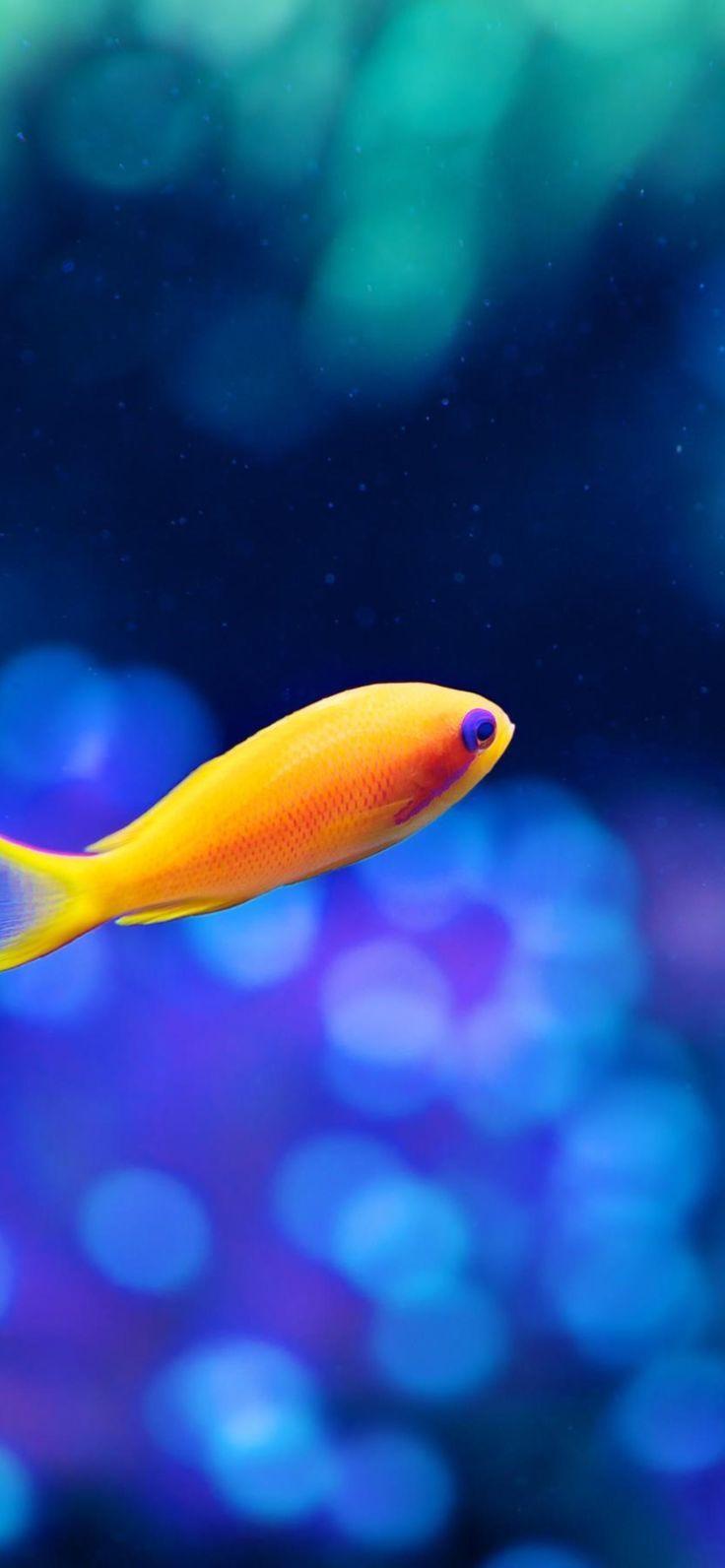 Download Iphone Xs Max Wallpaper Fish Animalbackgroundiphone Download Fish Iphone Max Fish Wallpaper Live Fish Wallpaper Animal Wallpaper