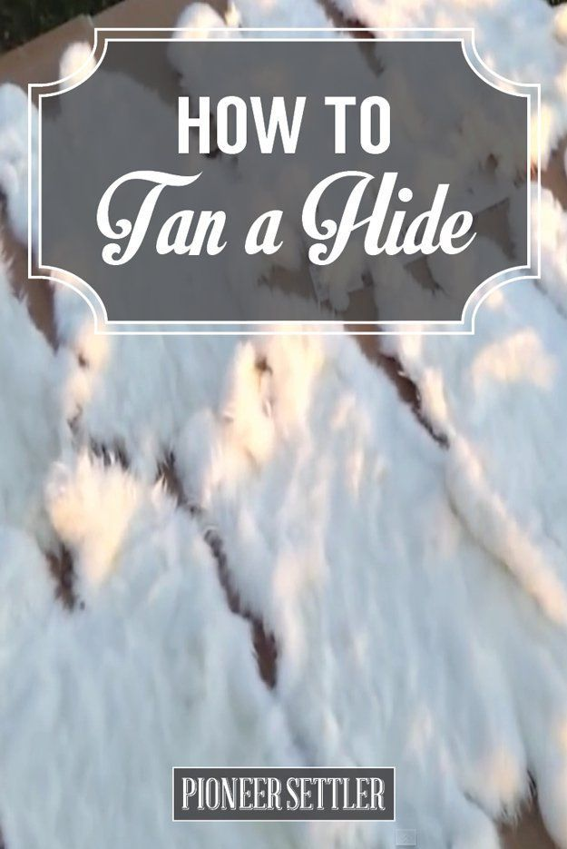 Tanning Hides of Animals   A Homesteading Guide