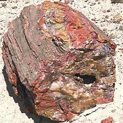 Древесина окаменелая. Окаменелое дерево :: Свойства камней и минералов