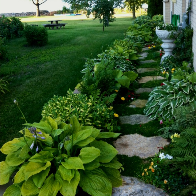 Landscaping With Irish Moss : Love the irish moss in my garden yard and