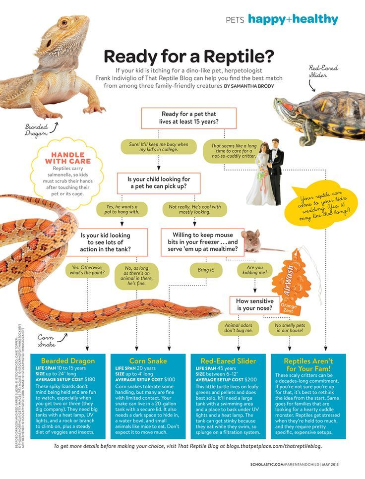 If Your Kid Is Itching For A Dino Like Pet This Infograph Can Help Pets Reptiles Bearded Dragon Care Pet Lizards