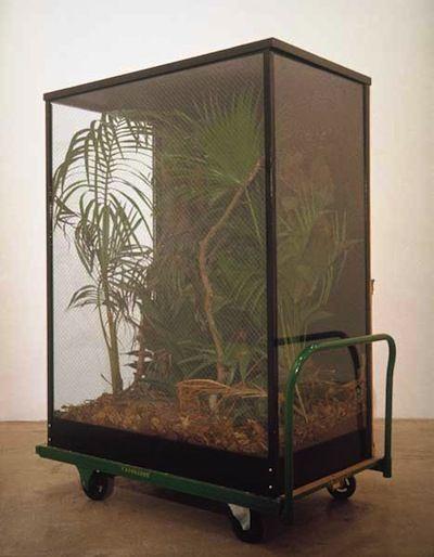 'Tropical Rain Forest Preserves' (1989, remade 2003) by Mark Dion & William Schefferine.