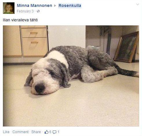 Konseptin toteutus lähti heti innolla käyntiin Rosenkullassa - Vieraileva/vakituinen lemmikki oli osa konseptia. Poiminta Rosenkullan Facebook ryhmän postauksista, postaaja Rosenkullan hoitaja Minna Mannonen.