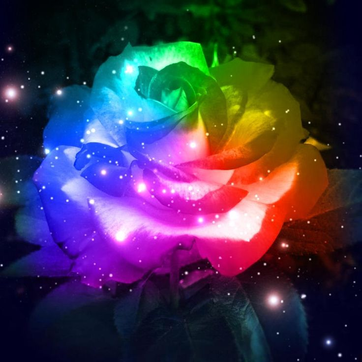 rainbow flowers wallpaper paintings - photo #29