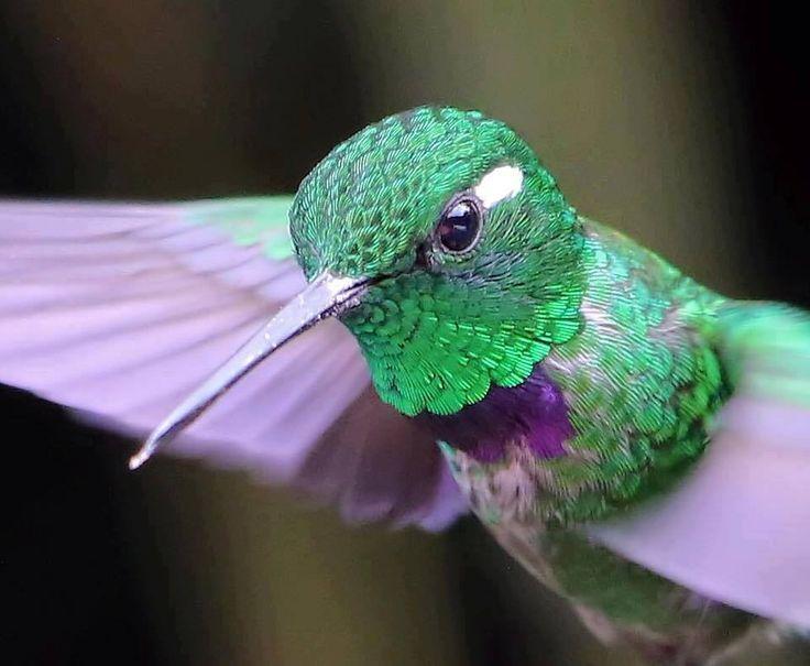Best Birds Images On Pinterest Andrew Zuckerman Bird Book - Photographer captures amazing close up photos of hummingbirds iridescent feathers