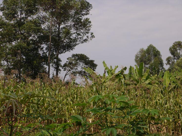 essay about my village in sri lanka