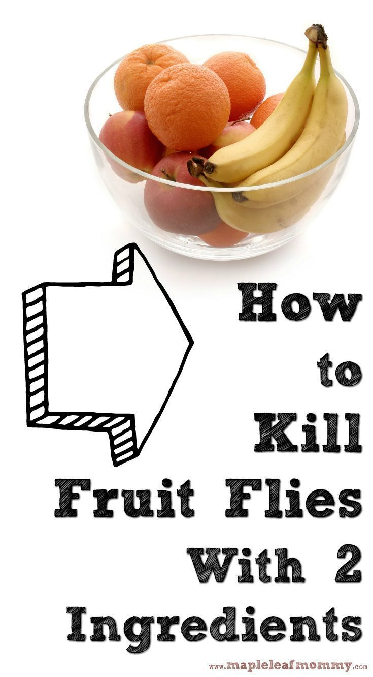 1139 best Fruit Fly Removal images on Pinterest   Fruit flies, Ant ...