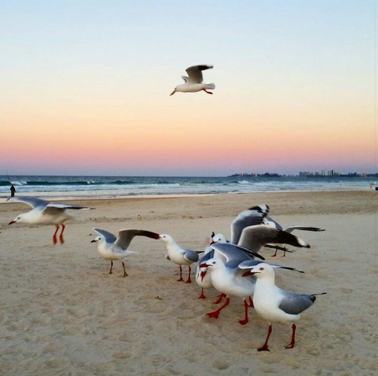 Currumbin Beach Sunset with the seagulls ~ Angels Unisex Sunrise