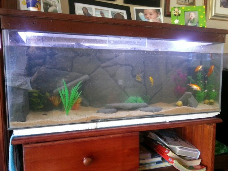 17 best images about diy fish tank decor on pinterest for Diy fish tank decor