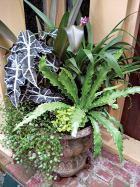 116 best shade container gardens images on pinterest pots gardening and container flowers - Indoor plants for shade ...