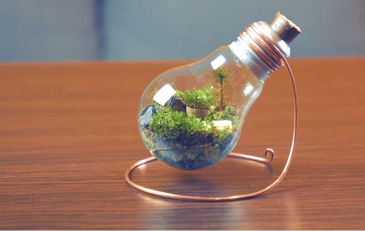 how to make a diy eternal terrarium