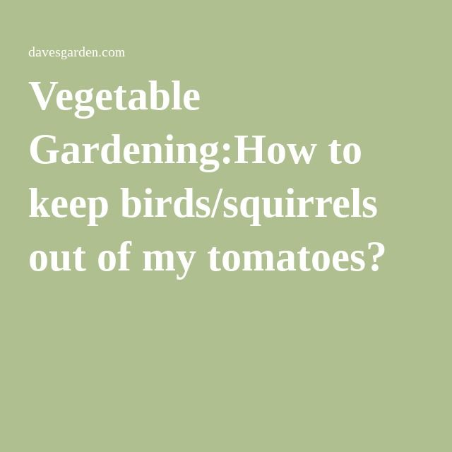 12 best images about gardening attracting friends scaring foes on pinterest gardens garden for How to keep squirrels out of my garden