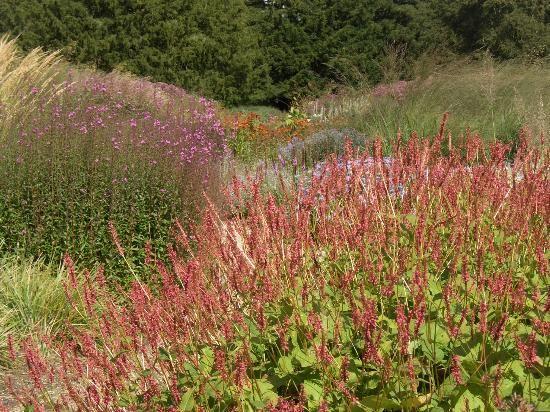 floral labyrinth trentham - Piet Oudolf