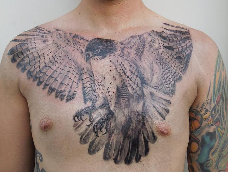 78 best images about hawk tattoo ideas on pinterest flying tattoo david hale and tattoo designs. Black Bedroom Furniture Sets. Home Design Ideas