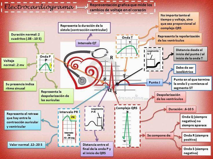 electrocardiograma - Cerca amb Google