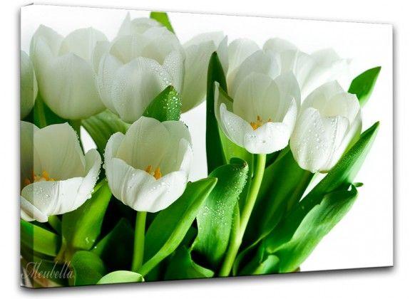 Schilderij Violet Tulip 3 is een canvas schilderij met paarse tulpen. De Violet Tulip 3 heeft een afmeting van 85 cm x 113 cm. https://www.meubella.nl/schilderijen-13/schilderij-white-tulip.html