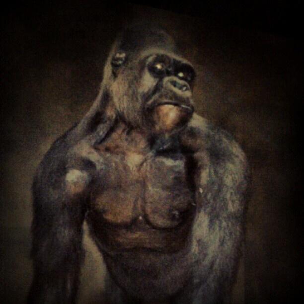 Gorilla - @ibbanez- #webstagram