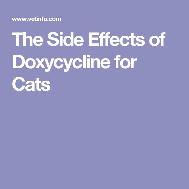 The Side Effects of Doxycycline for Cats