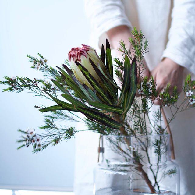 ご無沙汰してすみません。 相変わらず花でいっぱいです。 バスケットのような花器が仲間入りしました。  #花のある暮らし#花のある生活#暮らし#日々#おうち#家#インテリア#ライフスタイル#flowers#botanical#home#IGersJP#team_jp_#instagramjapan#リビング#プロテア#ワックスフラワー