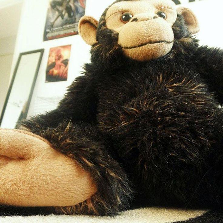 Steve the #monkey #chillin like a #mammal ˆ_ˆ
