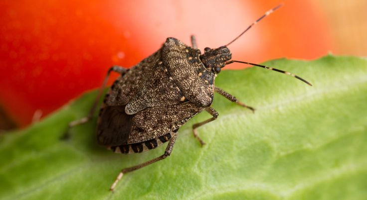 It's Officially Stink Bug Season: Here's How to Get Rid of Them