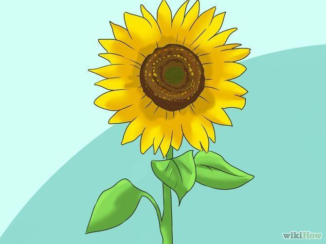 Grow Sunflowers Step 1.jpg