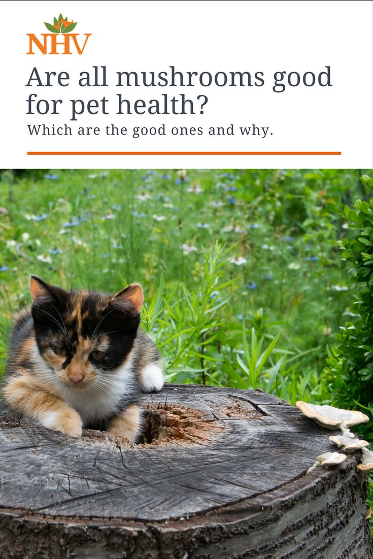 Cancer herbs for dogs - Medicinal Mushrooms For Cancer And Immunity In Dogs And Cats