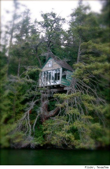 A precariously placed treehouse.