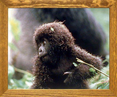 Baby Mountain Gorilla Wild Animal Wall Decor Brown Rust F... https://www.amazon.com/dp/B00H2CEFA0/ref=cm_sw_r_pi_dp_x_J7TlybQ5GGVDV