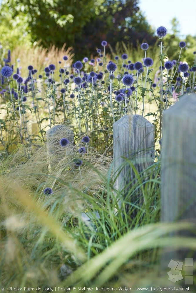 Best 10 Beach gardens ideas on Pinterest Beach fairy garden
