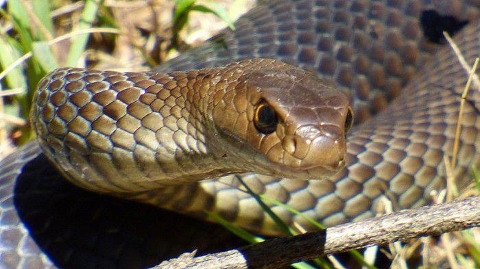 The Deadliest Animals In Australia Deadly Animals In Australia