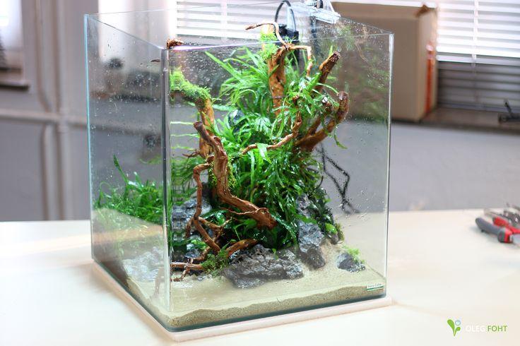 60 liter nano cube im aufbau alles fertig fehlt nur das Decoration aquarium 60 litres