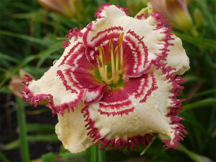 Flower garden paintings - The 733 Best Images About Daylilies On Pinterest Gardens