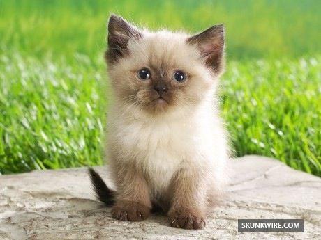 Lindo gatito bebe