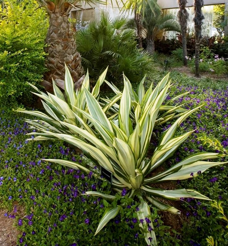 63 best low maintenance sun plants for north texas images for Low maintenance flowers outdoor