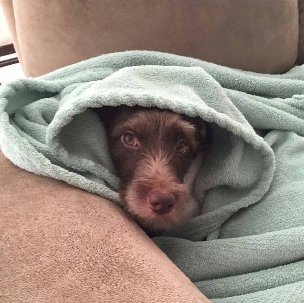 Olhar para a carinha dele quando ele se esconde em um lugar quentinho. | 10 felicidades que só quem adotou um cachorro poderia viver