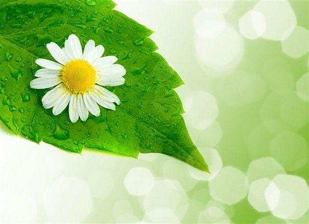 Dermatita alergica vulvara
