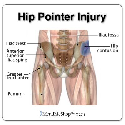 9 best fitness: iliac crest images on pinterest | crests, pointers, Cephalic Vein