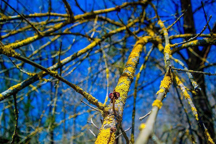 Álcázva...Long-erdő természetvédelmi terület,Sárospatak környékén...