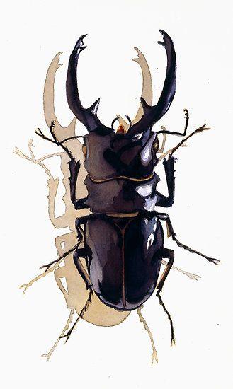 """""Odontolabis d. subita"" Stag Beetle Watercolor"" by Paul Jackson   Redbubble"