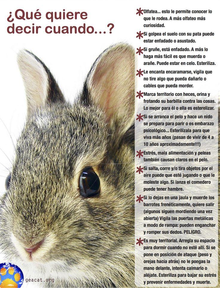 Los #conejos, como todos los animales, tienen su propia forma de comunicarse y, si queremos adoptar a uno, es importante que sepamos interpretar esa comunicación para entenderlo y para que nos podamos relacionar de forma respetuosa y gratificante.  ¡Aprende a hablar su idioma con este post-traductor!     Pdf:   https://drive.google.com/file/d/0B4cs1uOEedY9RVNMNWtlWkJuZkE/view?usp=drive_web