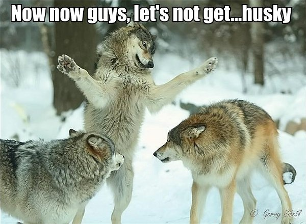 Wolf Pack No Pack.