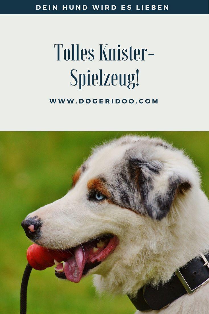 Die Knistertute Fur Ein Dauerhaft Spannendes Spiel Mit Deinem Hund Hunde Hund Beschaftigen Hundeverhalten