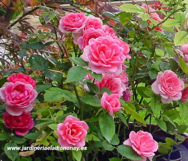 Jardineria eladio nonay feliz d a de la madre 2014 - Jardineria eladio nonay ...